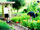 Teen Challenge London students enjoy working in the garden
